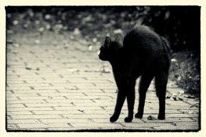 Schwarze Katze Freitag 13th