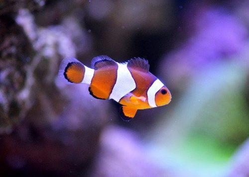 Nemo auf Latein
