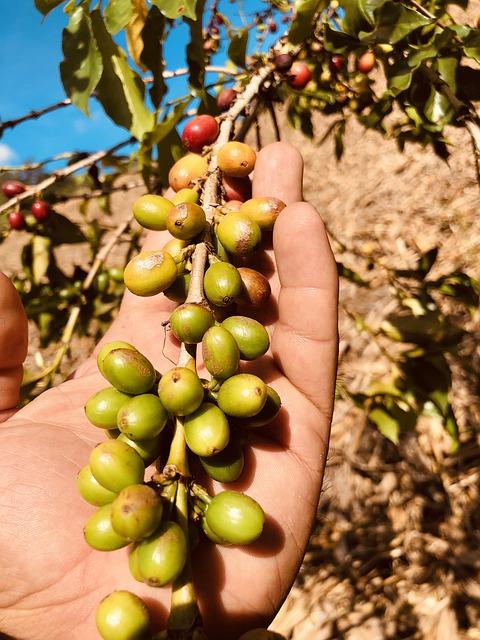 Kaffee-Mexiko
